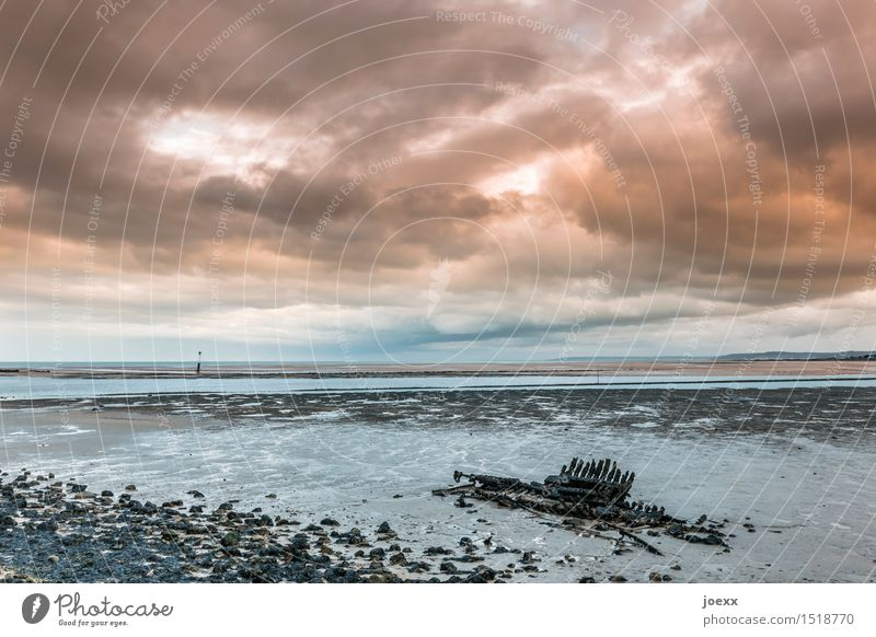 Skelett Himmel alt blau Wasser weiß Landschaft Wolken Ferne schwarz Küste Holz Horizont orange Vergänglichkeit schlechtes Wetter Endzeitstimmung