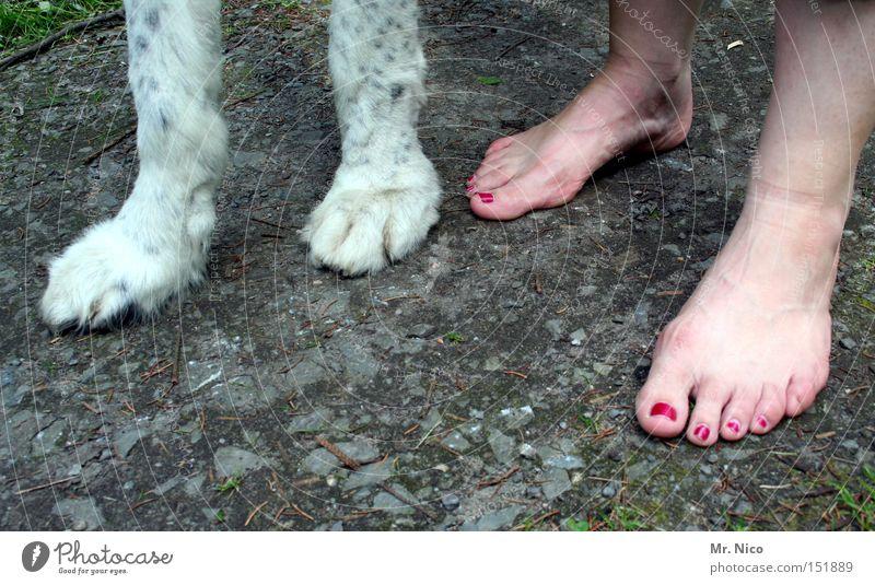 vierbeiner Pfote Zehen Nagellack Fell Hund Gassi gehen Barfuß Krallen Säugetier Vertrauen Frau Fuß Beine zweibeiner