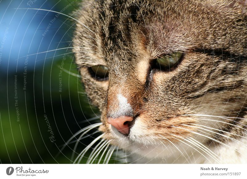 Nicky grün Auge Haare & Frisuren Katze Denken Nase Säugetier Haustier Schnurrhaar