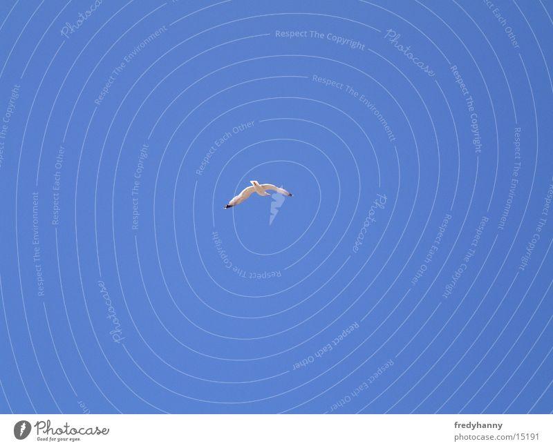 Möwe im Wind Vogel
