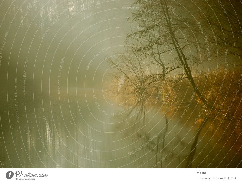 300! - Die Morgendämmerung Natur Wasser Baum ruhig See Landschaft Nebel Umwelt Fluss Sträucher natürlich Seeufer Flussufer