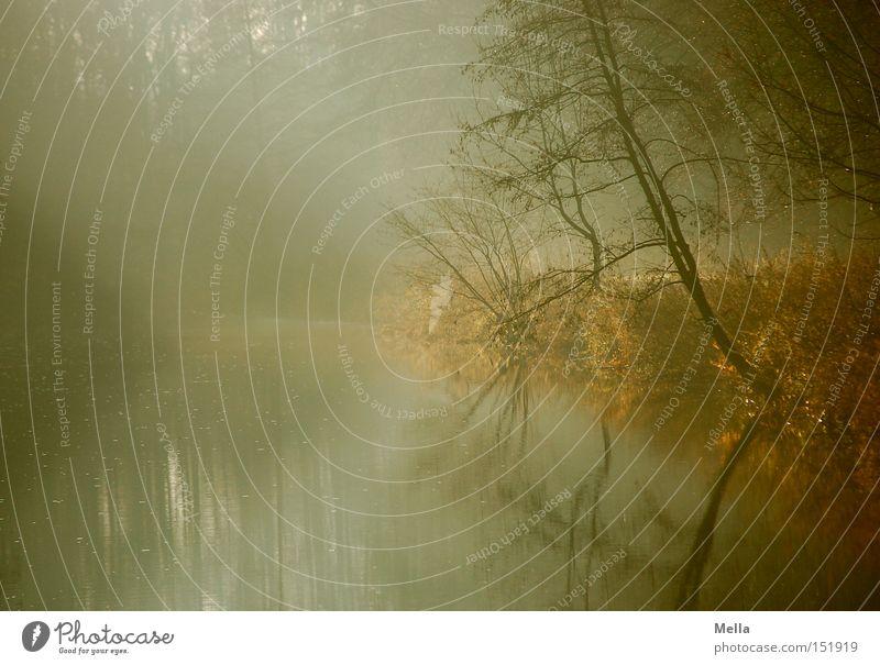 300! - Die Morgendämmerung Umwelt Natur Landschaft Wasser Nebel Baum Sträucher Seeufer Flussufer natürlich ruhig Farbfoto Außenaufnahme Menschenleer