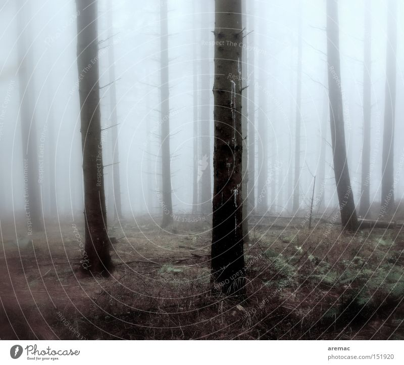 Nebulös Natur Baum Wald kalt Herbst Landschaft Stimmung Nebel