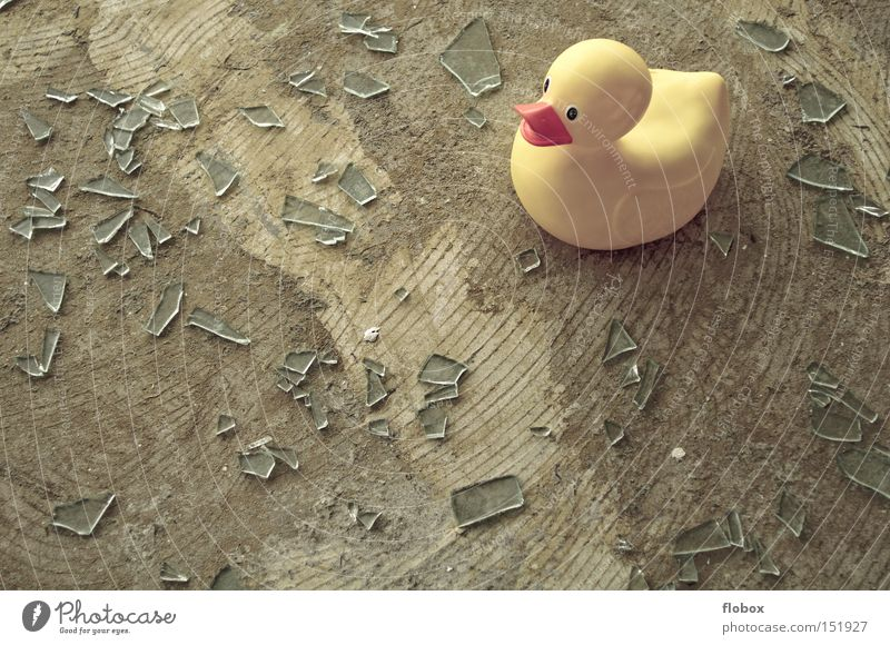 Ein Meer aus Scherben Fenster Glück Vogel Glas gefährlich gebrochen Ente Scherbe Splitter Badeente gesplittert Glasscherbe