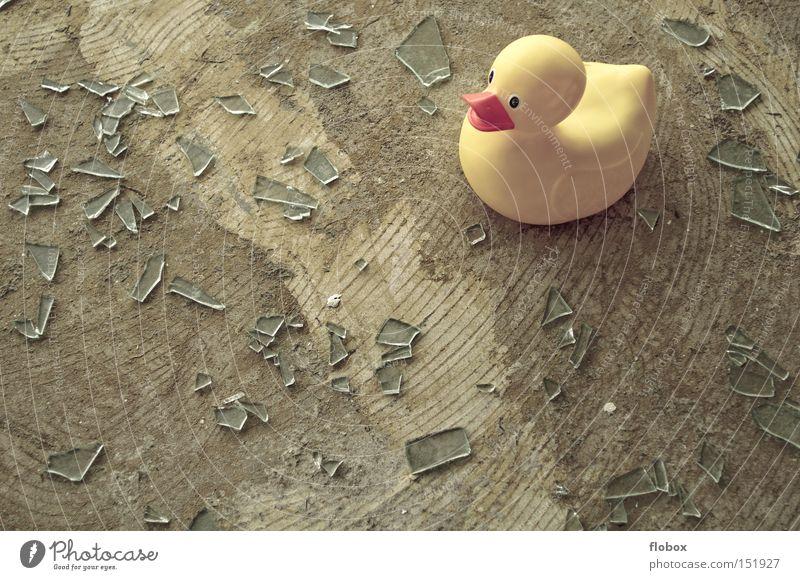 Ein Meer aus Scherben Glasscherbe Ente Badeente gebrochen Glück Fenster Splitter gesplittert gefährlich Vogel scherbenhaufen glasbruch