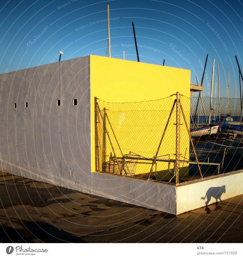 sneaky freaky dog Hund Licht Schatten Wasserfahrzeug Segel Mauer Wand gelb blau Kontrast Gassi gehen Hafen Säugetier schleichen