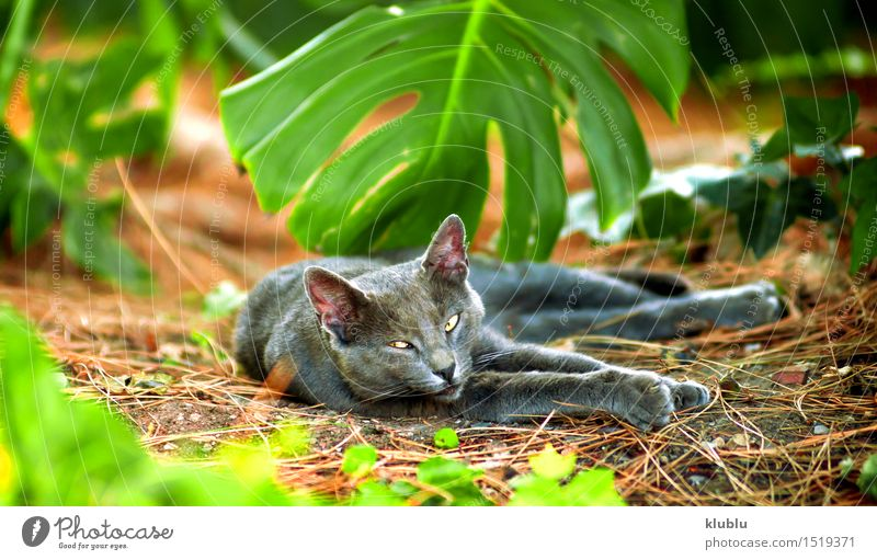 Ein Straßenkatzenstillstehen Katze Natur Stadt schön weiß Einsamkeit Tier schwarz lustig Spielen klein grau Stein Freundschaft Behaarung