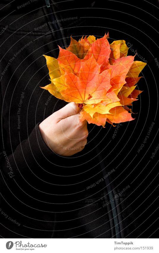 Gutes Blatt Herbst Jahreszeiten Laubbaum Baum Jacke Reißverschluss Spielkarte Kartenspiel Poker gelb orange vergilbt herbstlich Vergänglichkeit