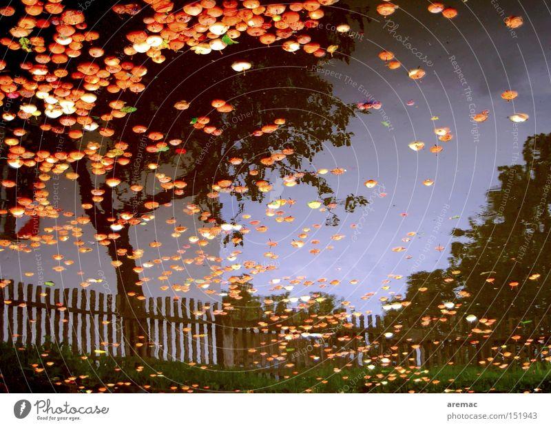 Feuchte Ernte Wasser Reflexion & Spiegelung Zaun Baum Apfel Teich Herbst Apfelbaum Vergänglichkeit Reflexion u. Spiegelung Im Wasser treiben Schwimmen & Baden