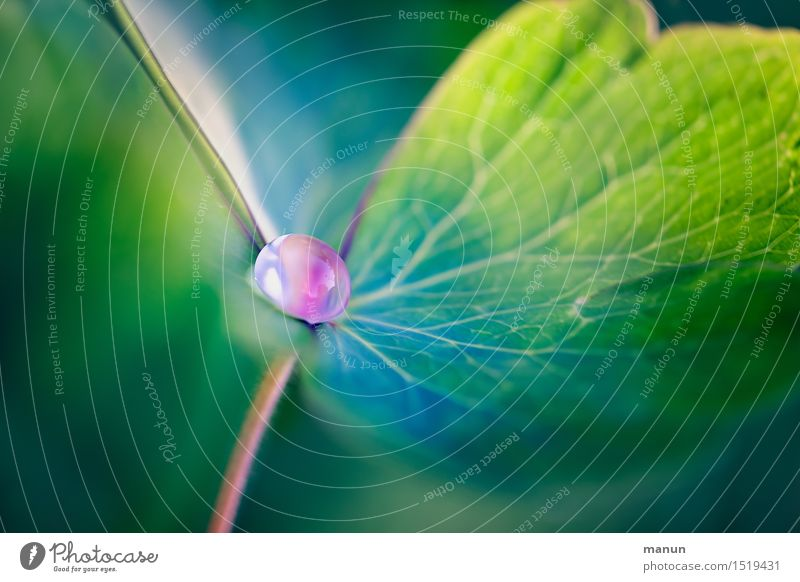 Wasserperle Natur Pflanze grün Sommer Blatt Frühling natürlich rosa ästhetisch Wassertropfen fantastisch türkis Tau Grünpflanze