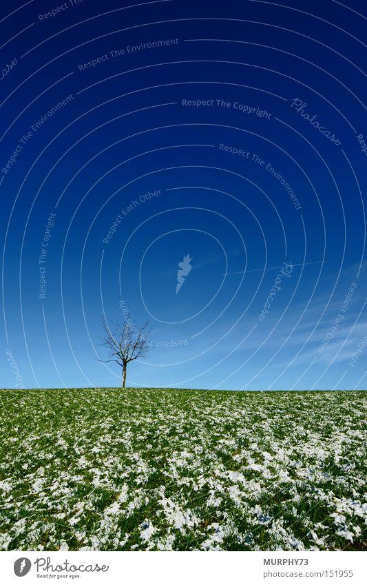 Einsame Weite in grün/blau Himmel weiß Baum Winter Wolken Schnee Wiese Gras Ast Kirschbaum