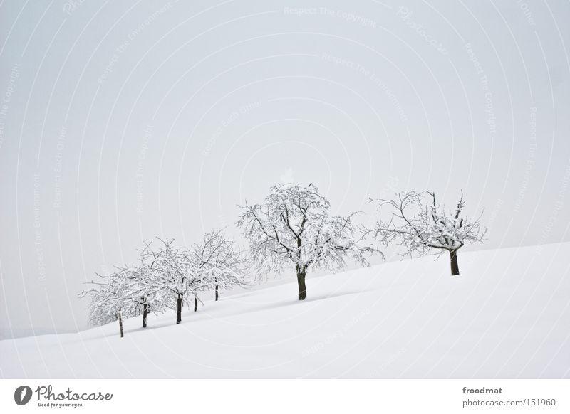 11111 1 1 weiß Baum Winter ruhig kalt Schnee Berge u. Gebirge grau trist Schweiz kahl sehr wenige