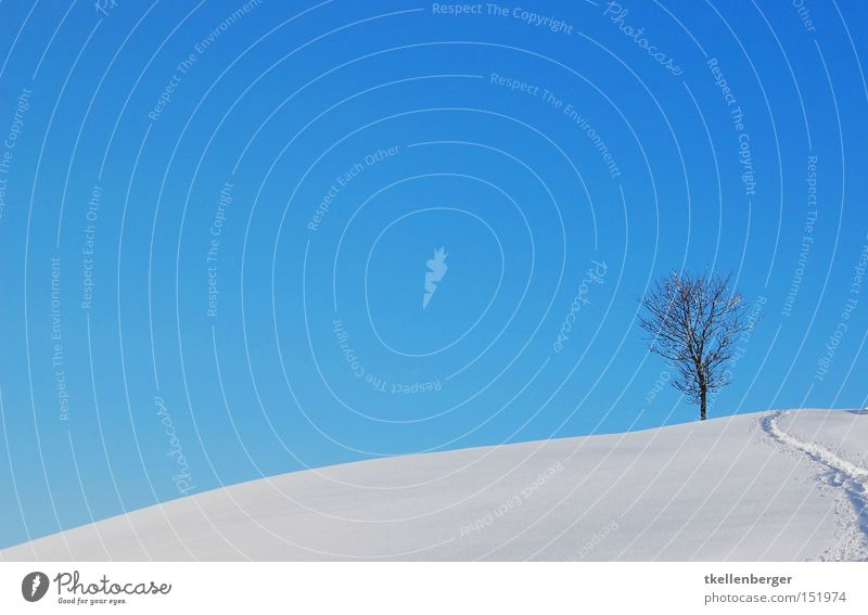 Zwei Welten Himmel Baum blau Winter Schnee Landschaft Erde Hintergrundbild Wetter Erde Spuren Fußspur besinnlich Schneeschuhe