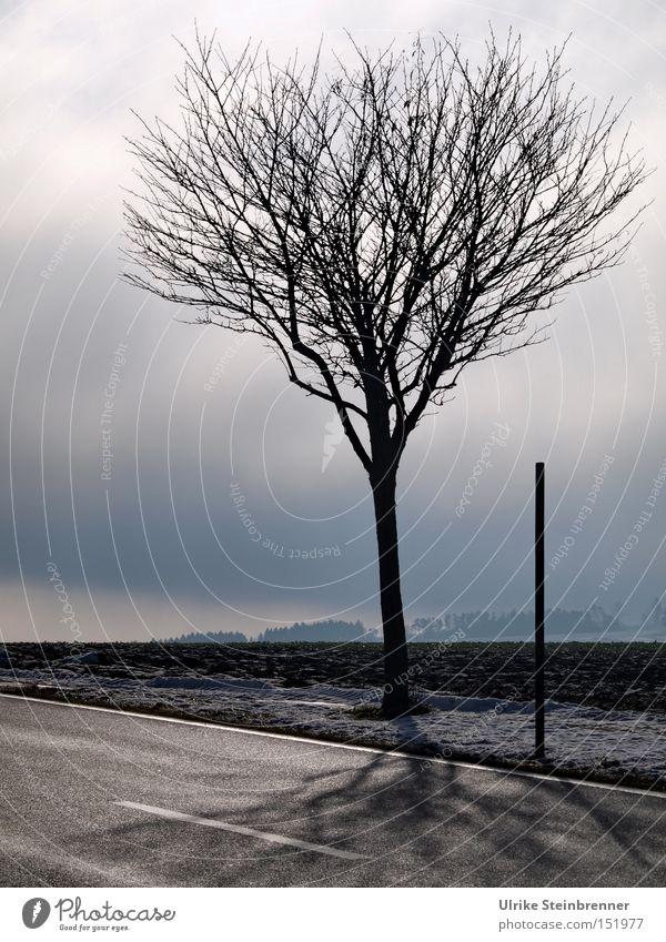 Erwartungshaltung Natur Himmel Baum Winter schwarz Wolken Straße grau Landschaft Eis 2 Nebel Frost stehen dünn Ast