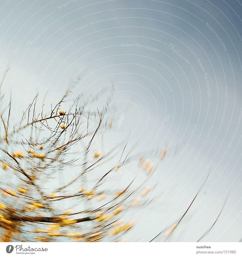 nochn kleines bisschen apfelstrudel Natur Himmel Baum gelb Herbst Bewegung Ast Apfel Landwirtschaft Ernte Drehung Apfelbaum