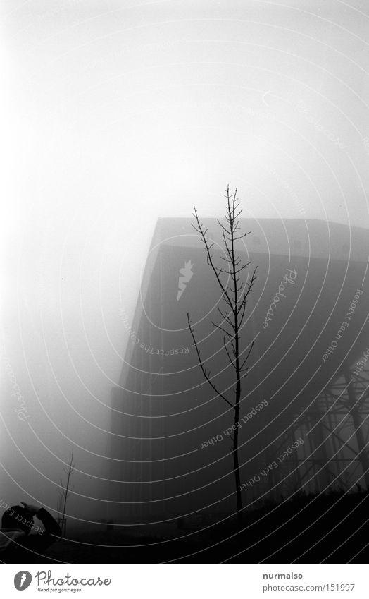 Graugrauen Mann Baum Einsamkeit grau Angst Architektur Nebel Filmindustrie analog Halle Panik unheimlich Kriminalroman Krimi Grauen Alpincenter am Tetraeder