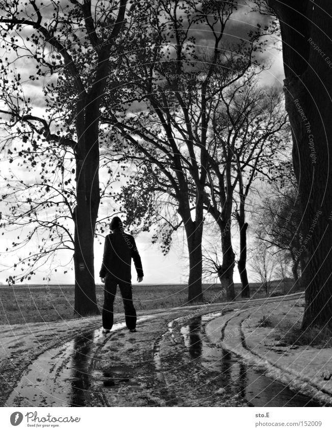 kalt pt.3 Mensch Allee Straße Wege & Pfade Baum Winter Schnee Schwarzweißfoto wandern Himmel Wolken Stimmung Geäst trist