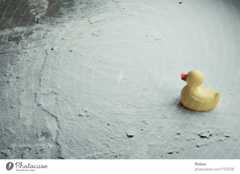 Weißes Meer weiß Freude Winter kalt Schnee Eis Ente Untergrund Schlittschuhlaufen Schlittschuhe Badeente Wintersport Pulverschnee