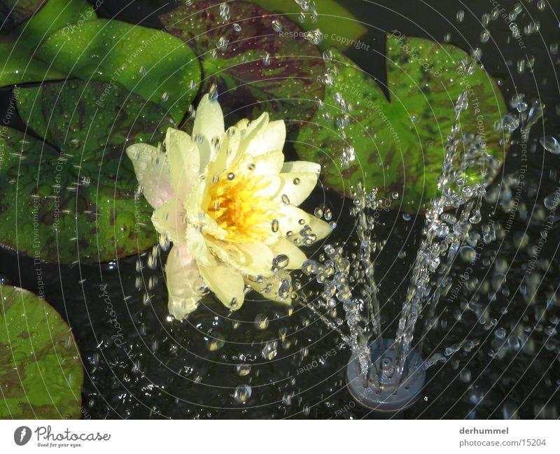 Blümchen im Kunstregen Wasser Blume Blatt gelb Wassertropfen Teich