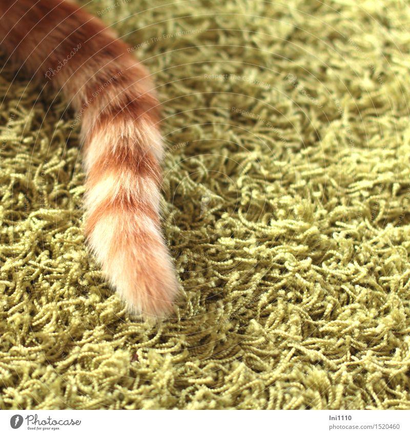 Lucky Katze grün schön weiß Tier Freude lustig natürlich Spielen braun liegen niedlich Neugier entdecken Fell Haustier