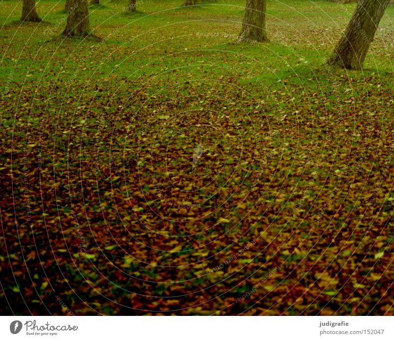 Badeinsel Natur Baum Blatt Herbst Wiese Gras Baumstamm Laubbaum