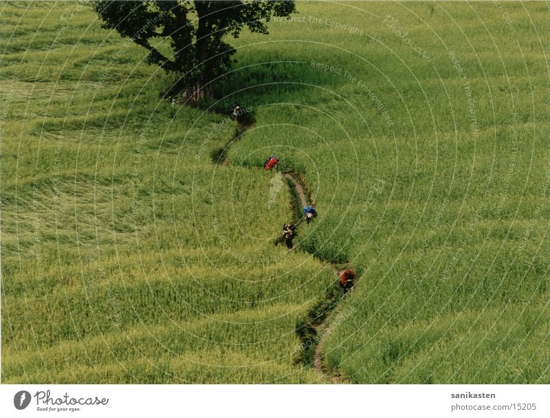 Reisfeld Mensch Natur Berge u. Gebirge Landschaft Feld Nepal