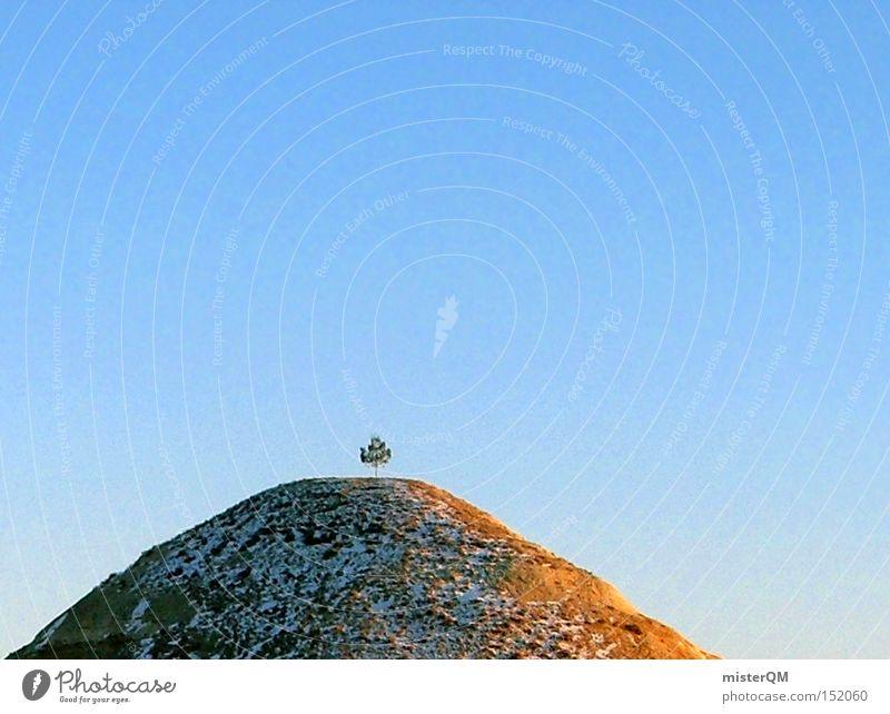 Gipfelstürmer - Bio setzt sich durch. Himmel Sommer Baum Einsamkeit Berge u. Gebirge Wachstum hoch Spitze Schönes Wetter Hoffnung Biologische Landwirtschaft