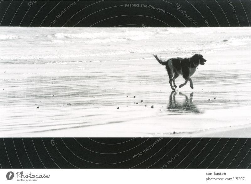 hund1 Meer Strand Hund rennen England