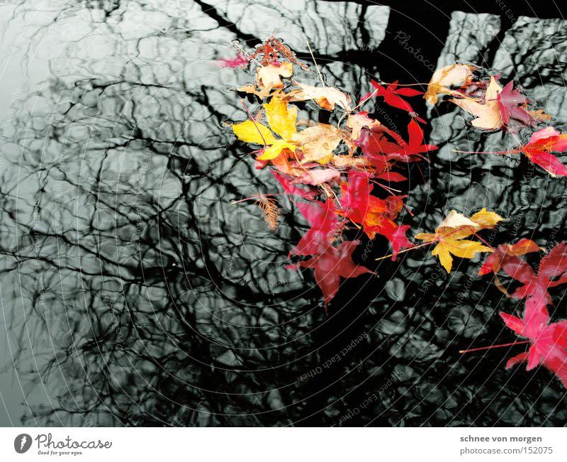 tiefen erkennbar Natur Wasser weiß Baum rot Blatt gelb Herbst grau See Landschaft herbstlich Herbstwetter Herbstwind