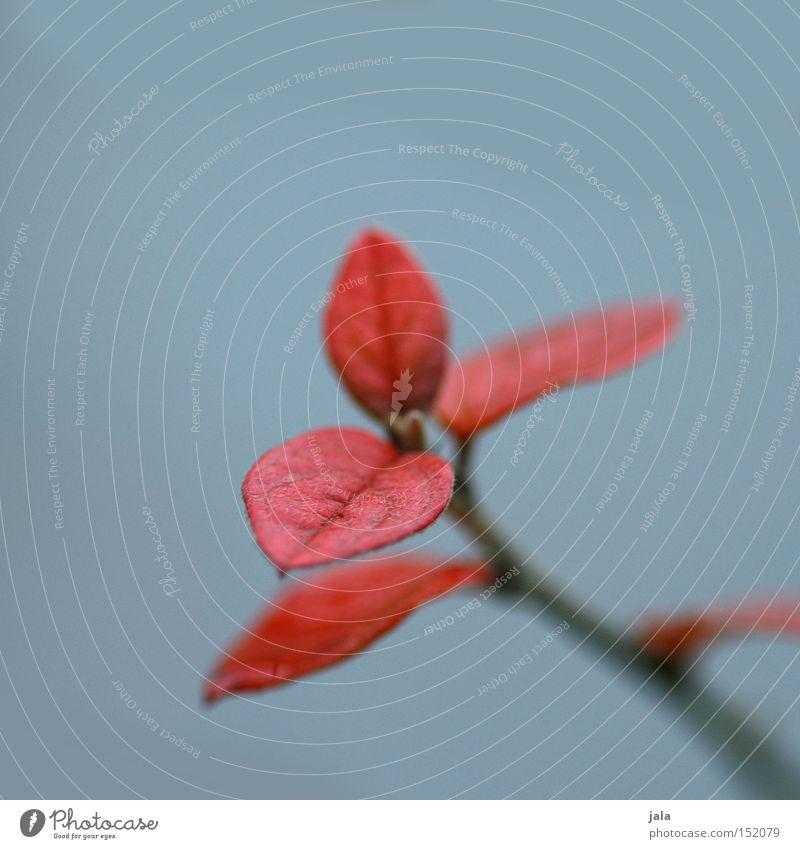 farbtupfer Natur Pflanze rot Winter Blatt Garten grau Park sanft