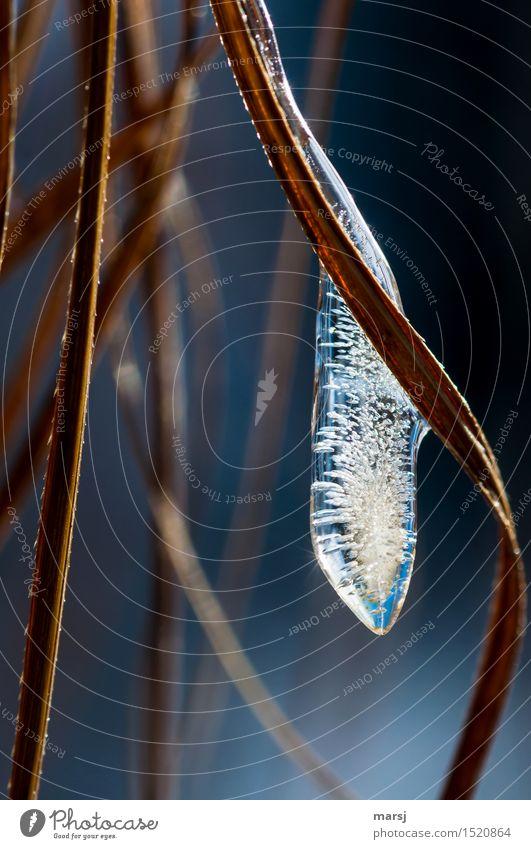 Schönheit mit Ablaufdatum Natur Winter Eis authentisch Vergänglichkeit Frost gefroren lang Luftblase Eiszapfen