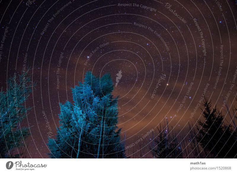 Sternenbäume Himmel Wolken Nachthimmel Baum Perspektive schön Farbfoto Außenaufnahme Menschenleer Froschperspektive