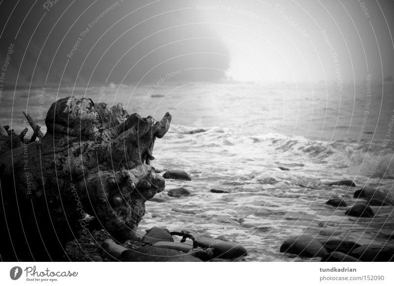 Kreidefelsen im Nebel Meer Rügen Wasser Holz Natur Ostsee Strandgut Wellen Einsamkeit grau schwarz Landschaft