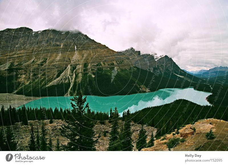 Der Peyto Lake im September Wasser Baum grün Ferien & Urlaub & Reisen Berge u. Gebirge See Aussicht türkis Kanada Gletscher Gebirgssee Rocky Mountains Jasper