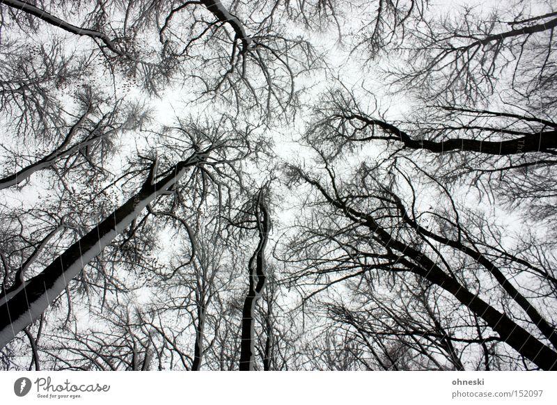 Winterwald Himmel weiß Baum Wald Schnee grau Ast Baumstamm Labyrinth Froschperspektive