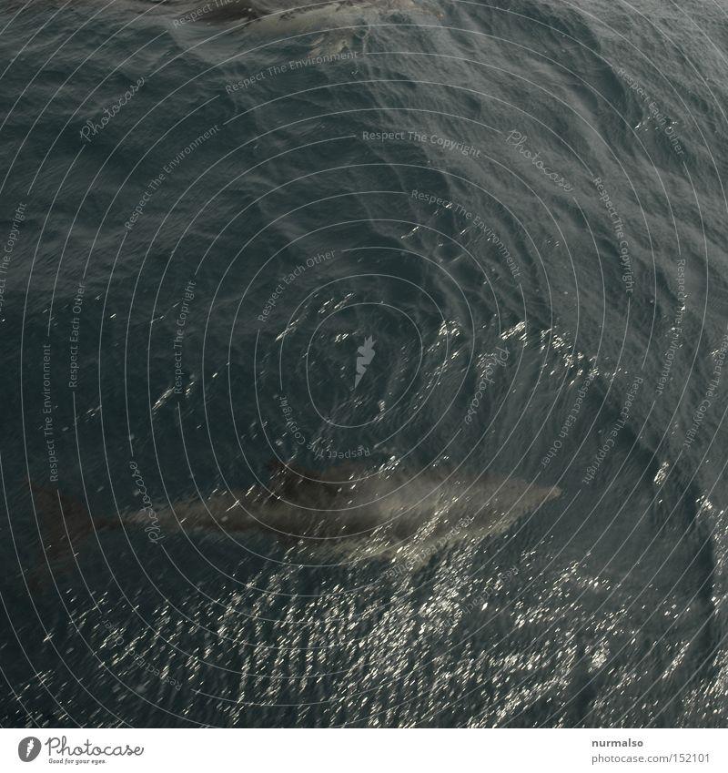 Guter Freund 3 Natur Wasser Ferien & Urlaub & Reisen Meer Wellen Schwimmen & Baden Fisch Filmindustrie Ereignisse Salz Segelboot Atlantik Delphine Flosse Wal