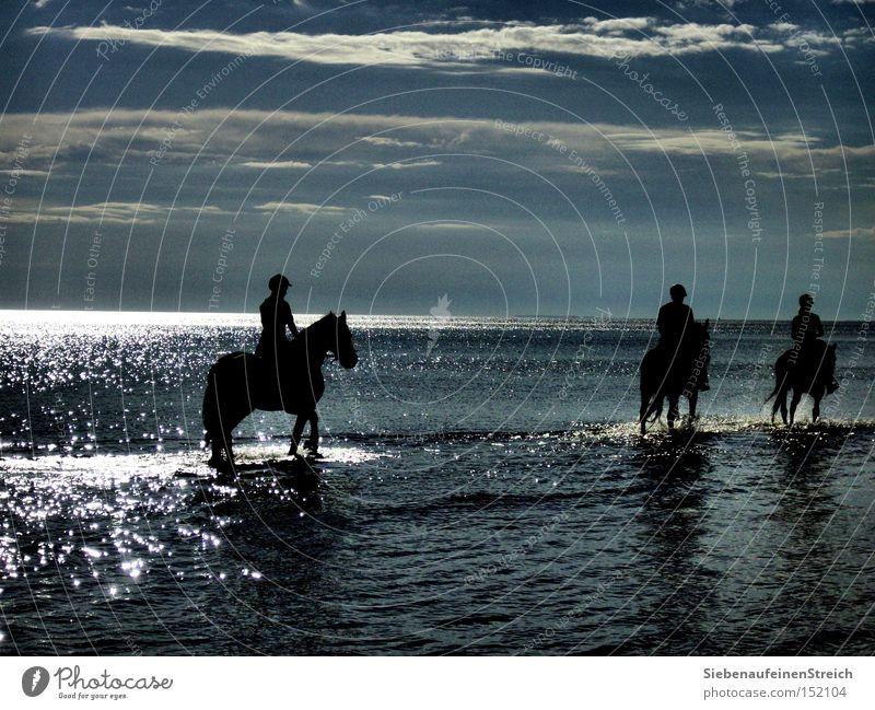 Wellengang Pferd Meer Reiter Sehnsucht ruhig Sonne Wolken glänzend Ferien & Urlaub & Reisen Sommer Erholung Strand Horizont Wasser Blauer Himmel Fernweh
