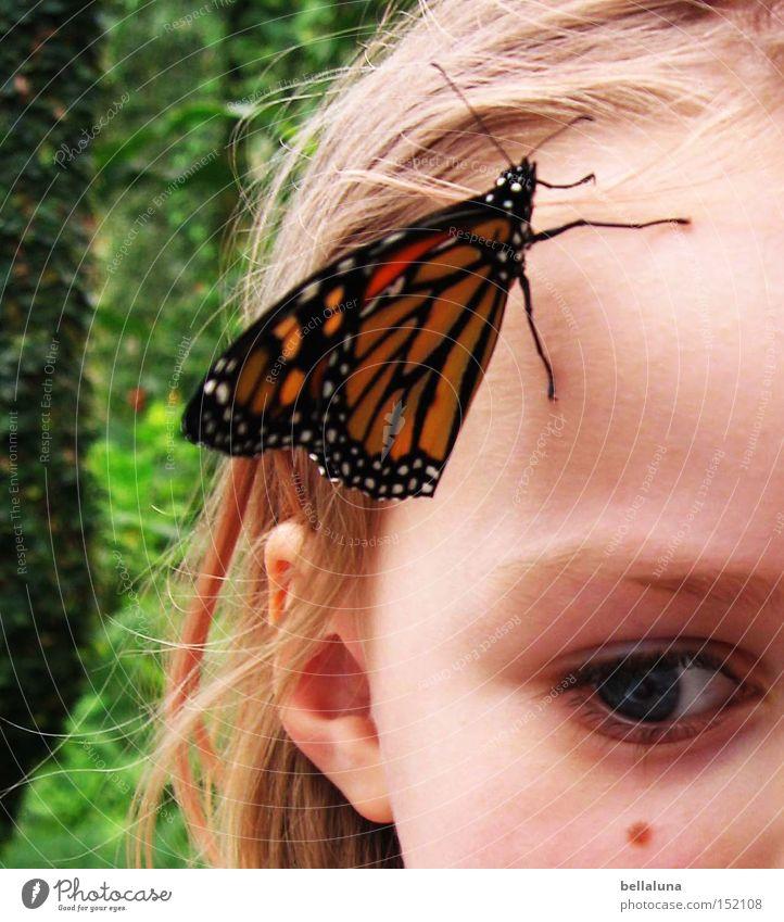 kleine Wunder 2 Kind Natur schön Baum Mädchen Blume Gesicht Auge Blüte blond sitzen Schmetterling Fühler Anschnitt Symbiose