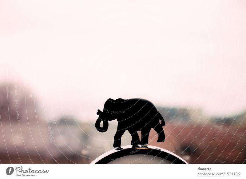 Elefant igure Tier Freude Fenster Leben Stil Spielen Lifestyle Freiheit Party Stimmung Design wild Häusliches Leben Freizeit & Hobby elegant