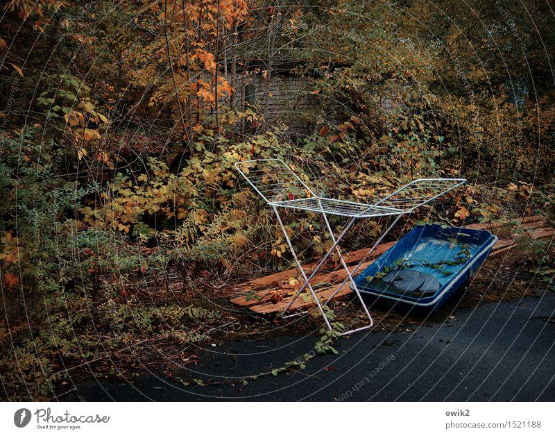 Leerstand Natur Pflanze Umwelt Herbst stehen leer warten Kunststoff Herbstlaub herbstlich Herbstfärbung Wäscheständer