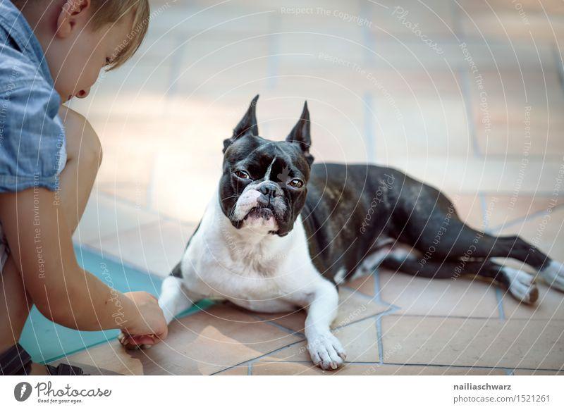 Boston Terrier und Junge Spielen Kind Mensch Tier Haustier Hund beobachten festhalten frech klein lustig niedlich Freundschaft Langeweile Unlust Misstrauen Neid
