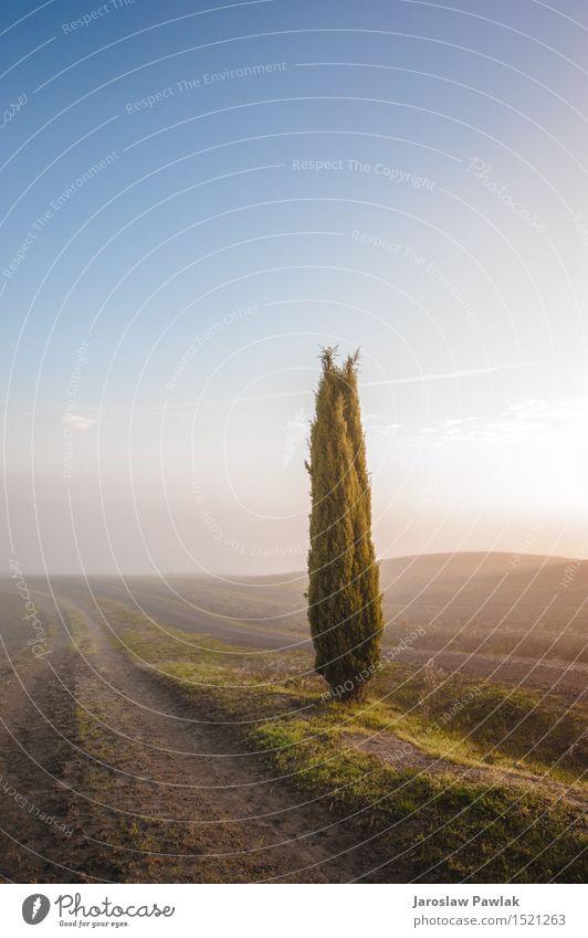 Himmel Natur Ferien & Urlaub & Reisen Pflanze blau grün schön Sommer Baum Sonne Landschaft Wolken Haus Umwelt gelb Wiese