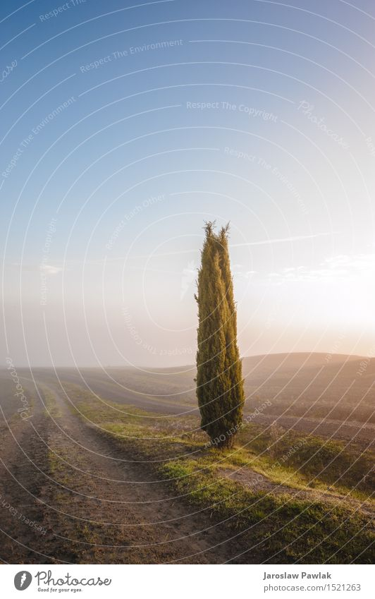 Toskanische Zypressenbäume auf den Feldern in einem fantastischen Licht Himmel Natur Ferien & Urlaub & Reisen Pflanze blau grün schön Sommer Baum Sonne