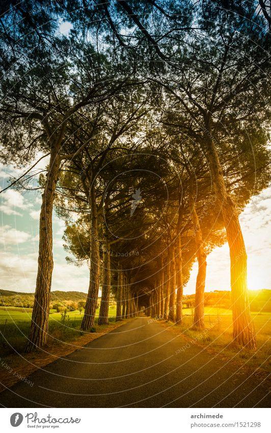Straße in der Natur bei Sonnenuntergang schön Sommer Landschaft Pflanze Baum Wege & Pfade Unendlichkeit Landstraße vertikal majestätisch Toskana Zypresse