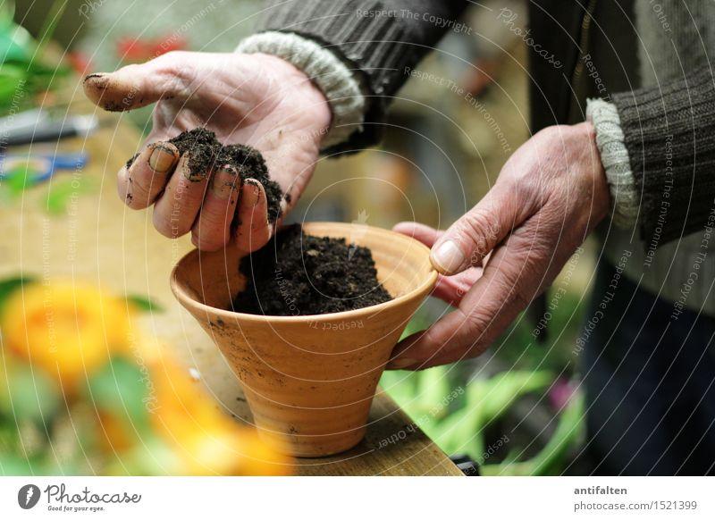 En paar Blome flanze II Arbeit & Erwerbstätigkeit Beruf Gartenarbeit Floristik Blumenhändler Mensch maskulin Männlicher Senior Mann Großvater Leben Arme Hand