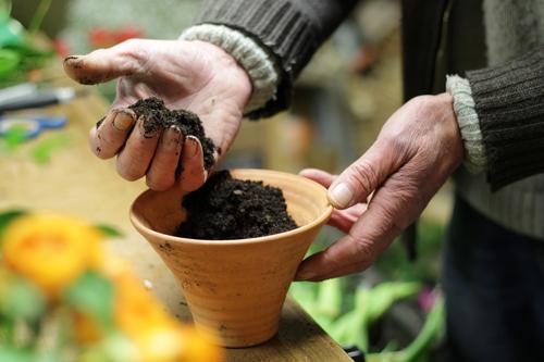 En paar Blome flanze II Mensch Mann Hand Blume Blatt Erwachsene Leben Blüte Senior natürlich Arbeit & Erwerbstätigkeit maskulin Erde Arme 45-60 Jahre