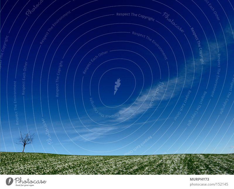 Einsame Weite in blau / grün Himmel weiß Baum Winter Wolken Schnee Wiese Gras Ast Kirschbaum