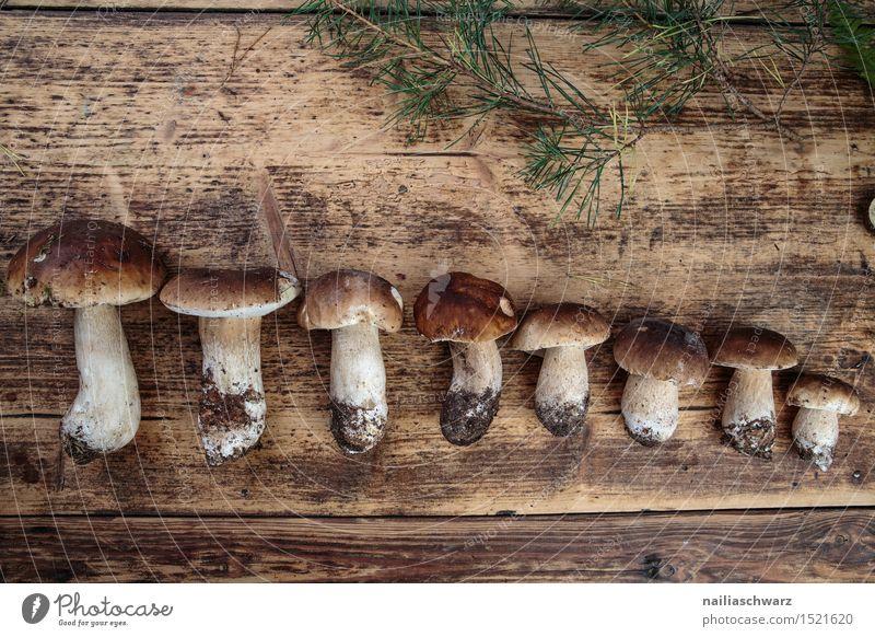 Frische Steinpilze aus dem Wald Lebensmittel Ernährung Moos Blatt Hut frisch braun fichtensteinpilz edelpilz ganz mehrere stiel waldpilz erde Pilz Farbfoto