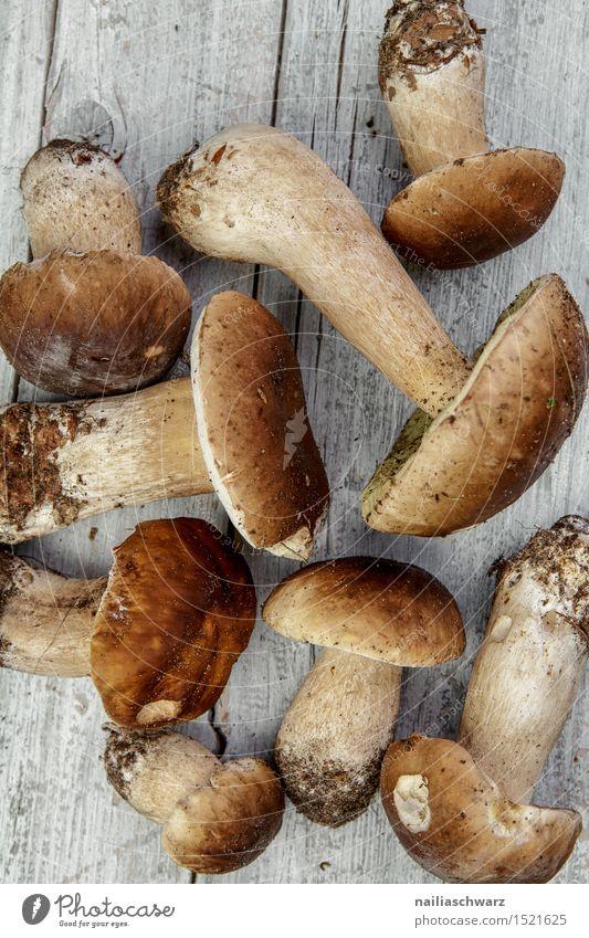 Frische Steinpilze aus dem Wald schön Blatt natürlich Gesundheit grau Lebensmittel braun frisch mehrere Ernährung genießen Bioprodukte Duft Hut Pilz Moos