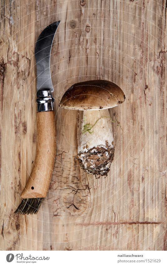 Frische Steinpilze aus dem Wald Lebensmittel Ernährung Messer Moos Blatt Hut Duft frisch braun pilzmesser fichtensteinpilz edelpilz ganz mehrere stiel Pilz